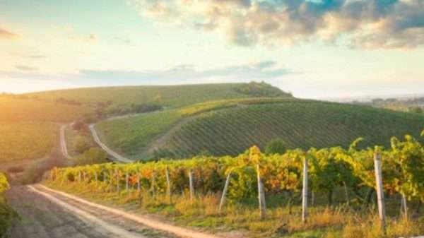 organic_winery